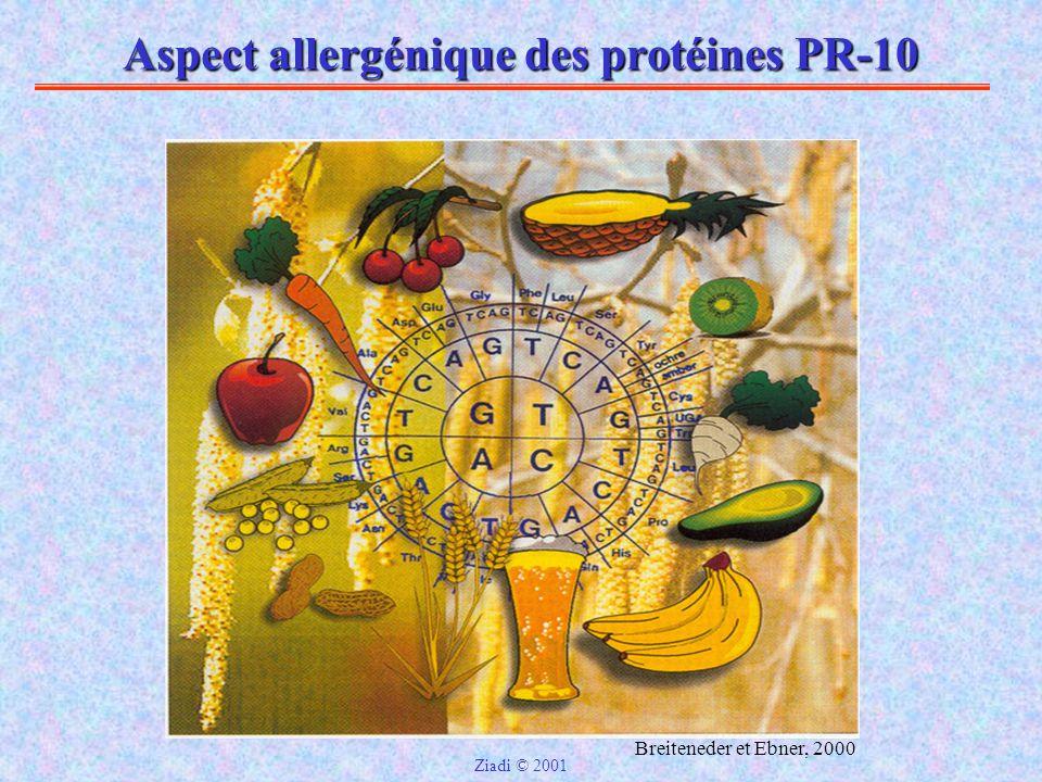 Aspect allergénique des protéines PR-10 Breiteneder et Ebner, 2000 Ziadi © 2001