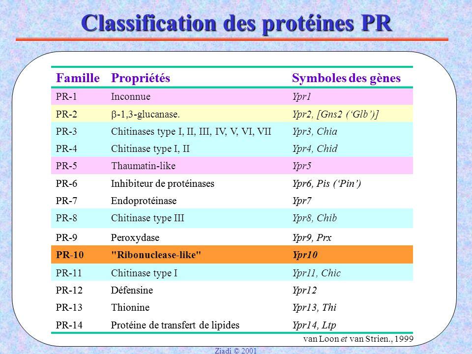 Classification des protéines PR FamillePropriétésSymboles des gènes PR-1InconnueYpr1 PR-2  -1,3-glucanase.