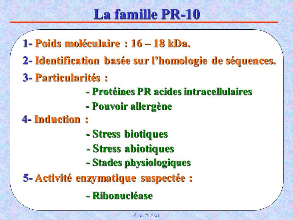 La famille PR-10 2- Identification basée sur l'homologie de séquences.