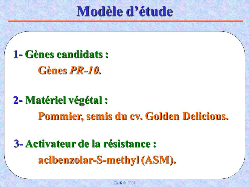 Modèle d'étude 1- Gènes candidats : 1- Gènes candidats : Gènes PR-10.