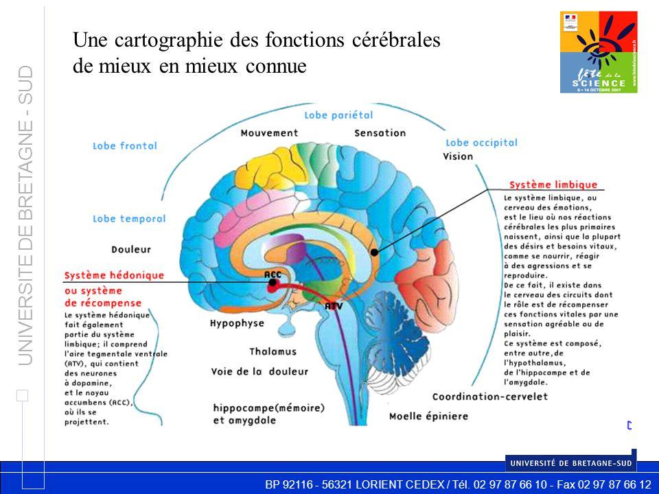 BP 92116 - 56321 LORIENT CEDEX / Tél. 02 97 87 66 10 - Fax 02 97 87 66 12 UNIVERSITE DE BRETAGNE - SUD Une cartographie des fonctions cérébrales de mi