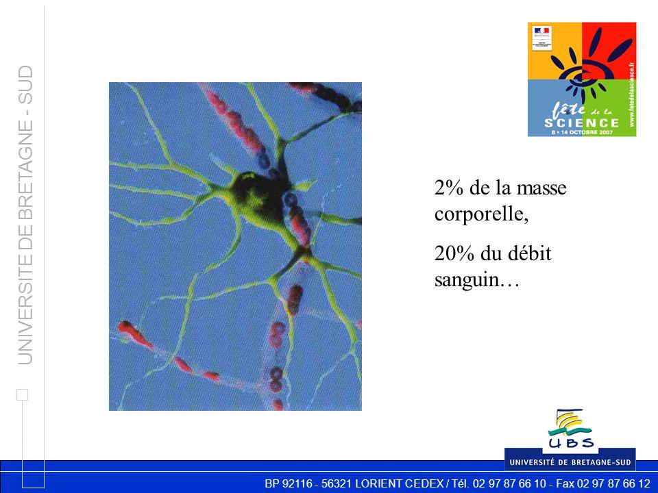 BP 92116 - 56321 LORIENT CEDEX / Tél. 02 97 87 66 10 - Fax 02 97 87 66 12 UNIVERSITE DE BRETAGNE - SUD 2% de la masse corporelle, 20% du débit sanguin