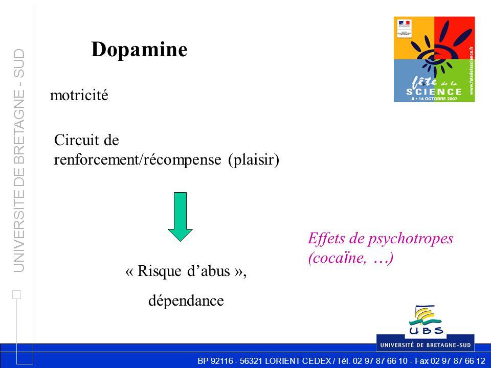 BP 92116 - 56321 LORIENT CEDEX / Tél. 02 97 87 66 10 - Fax 02 97 87 66 12 UNIVERSITE DE BRETAGNE - SUD Dopamine motricité Circuit de renforcement/réco