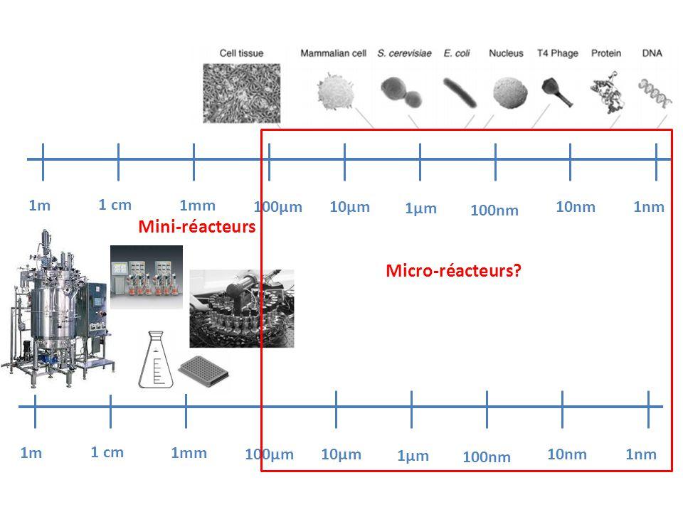 1m 1 cm 1mm 100µm10µm 1µm 100nm 10nm 1nm 1m 1 cm 1mm 100µm10µm 1µm 100nm 10nm 1nm Micro-réacteurs? Mini-réacteurs