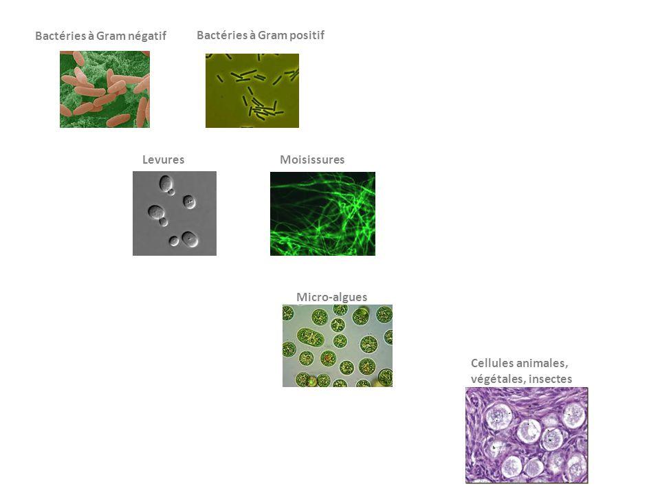 Bactéries à Gram négatif Bactéries à Gram positif LevuresMoisissures Micro-algues Cellules animales, végétales, insectes