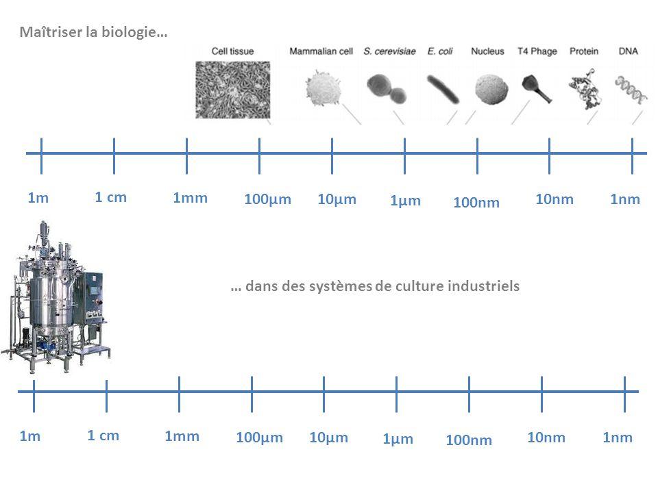 1m 1 cm 1mm 100µm10µm 1µm 100nm 10nm 1nm 1m 1 cm 1mm 100µm10µm 1µm 100nm 10nm 1nm Maîtriser la biologie… … dans des systèmes de culture industriels