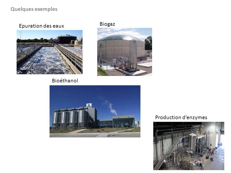 Quelques exemples Bioéthanol Production d'enzymes Epuration des eaux Biogaz