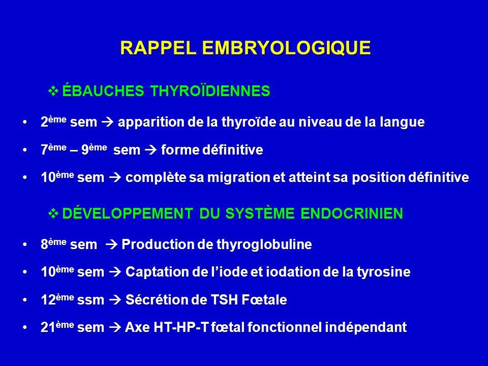 RAPPEL EMBRYOLOGIQUE  ÉBAUCHES THYROÏDIENNES 2 ème sem  apparition de la thyroïde au niveau de la langue2 ème sem  apparition de la thyroïde au niv