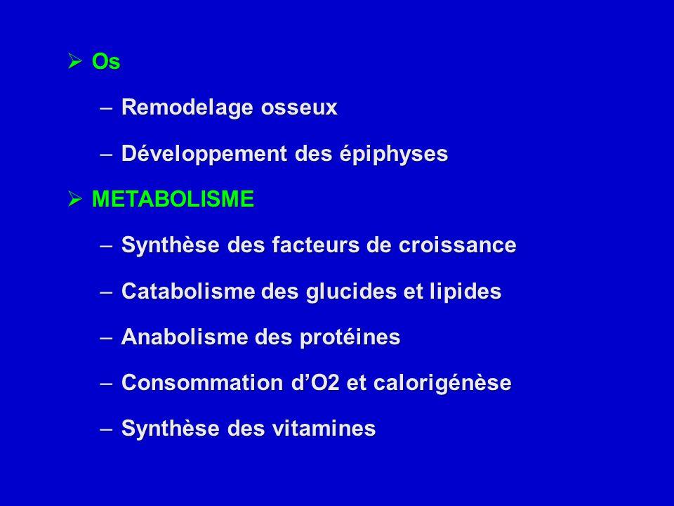  Os –Remodelage osseux –Développement des épiphyses  METABOLISME –Synthèse des facteurs de croissance –Catabolisme des glucides et lipides –Anabolis