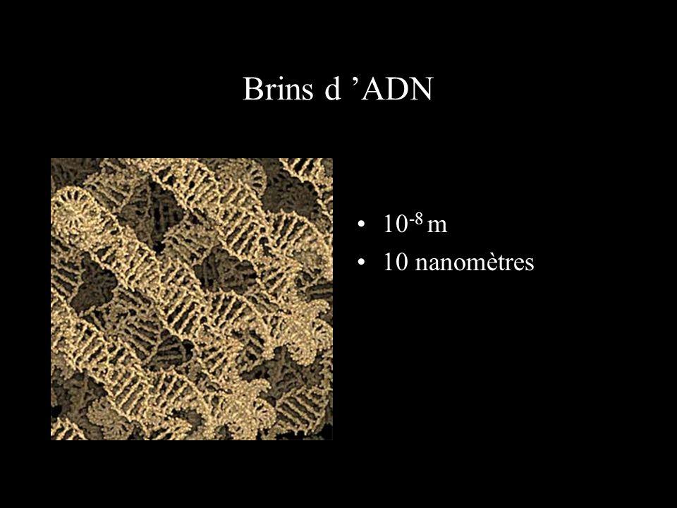 Atomes formant la molécule d 'ADN 10 -9 m 1 nanomètre