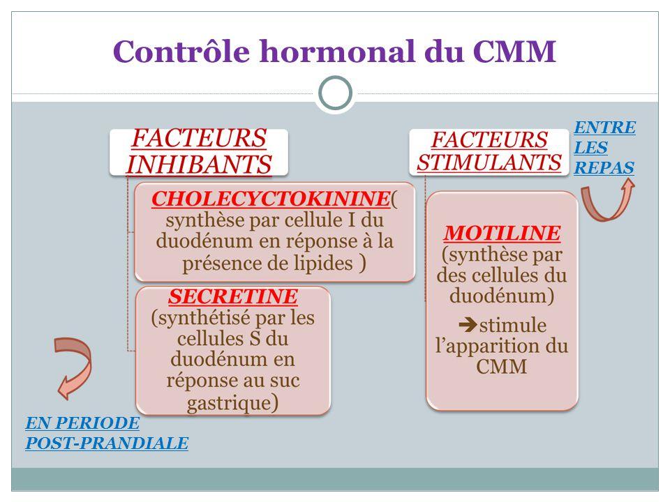 Contrôle hormonal du CMM EN PERIODE POST-PRANDIALE ENTRE LES REPAS