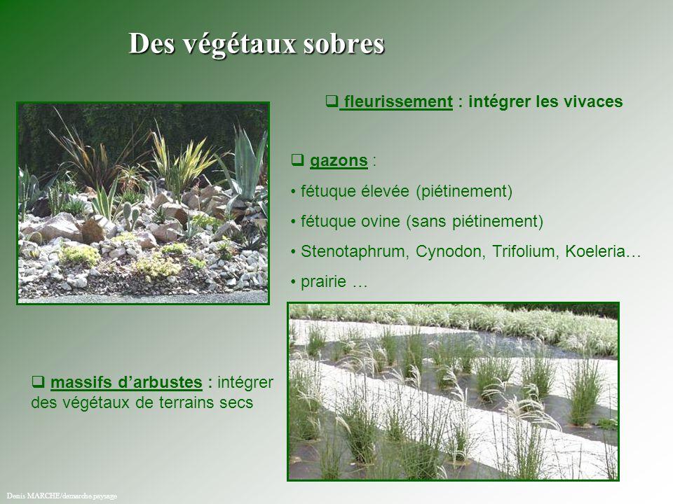   fleurissement : intégrer les vivaces   gazons : fétuque élevée (piétinement) fétuque ovine (sans piétinement) Stenotaphrum, Cynodon, Trifolium,