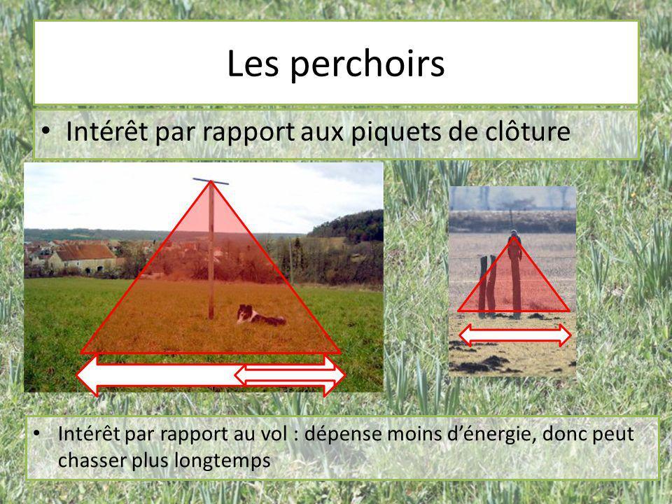 Les perchoirs Intérêt par rapport aux piquets de clôture Intérêt par rapport au vol : dépense moins d'énergie, donc peut chasser plus longtemps