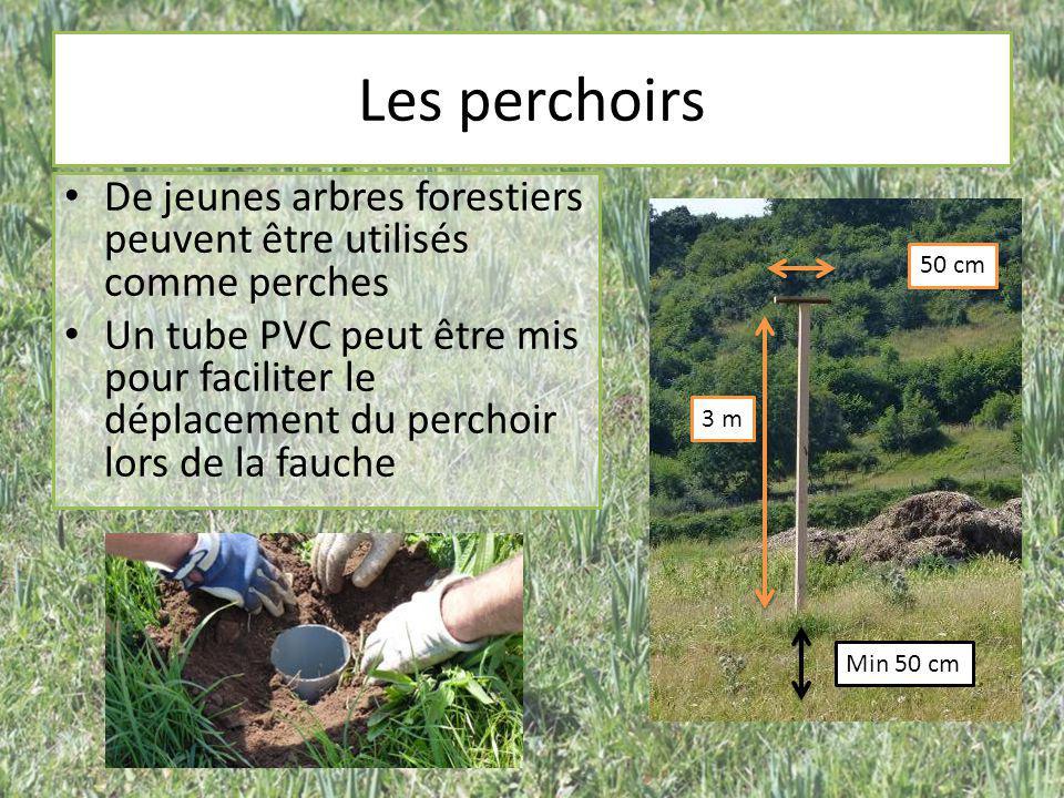 Les perchoirs 3 m 50 cm Min 50 cm De jeunes arbres forestiers peuvent être utilisés comme perches Un tube PVC peut être mis pour faciliter le déplacem