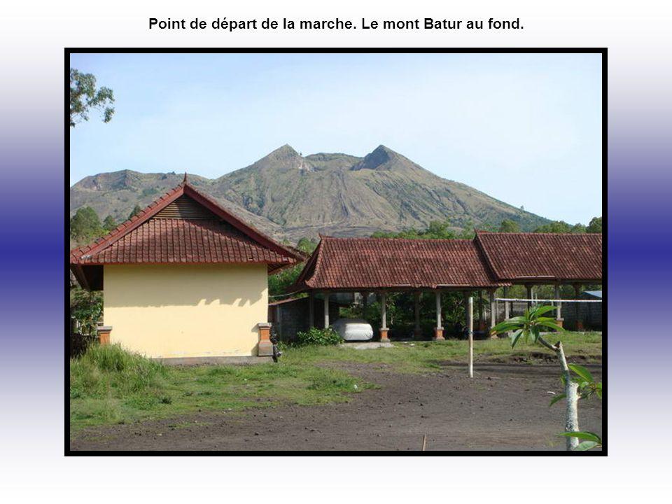 Point de départ de la marche. Le mont Batur au fond.