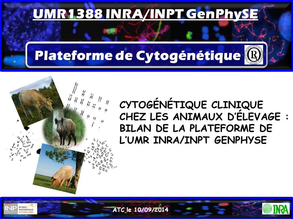 Plateforme de Cytogénétique CYTOGÉNÉTIQUE CLINIQUE CHEZ LES ANIMAUX D'ÉLEVAGE : BILAN DE LA PLATEFORME DE L'UMR INRA/INPT GENPHYSE ATC le 10/09/2014