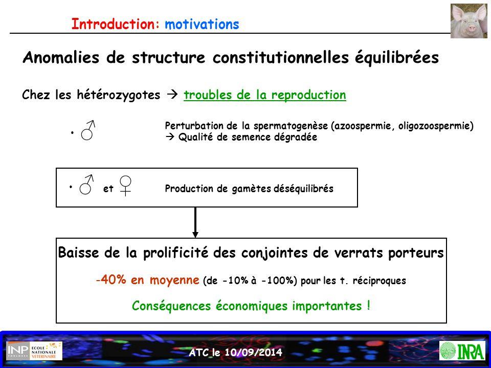 Anomalies de structure constitutionnelles équilibrées Chez les hétérozygotes  troubles de la reproduction ♂ ♂ et ♀ Perturbation de la spermatogenèse