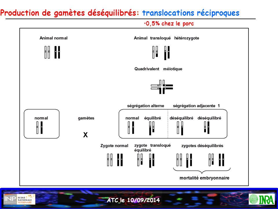 ATC le 10/09/2014 Production de gamètes déséquilibrés: translocations réciproques 0,5% chez le porc