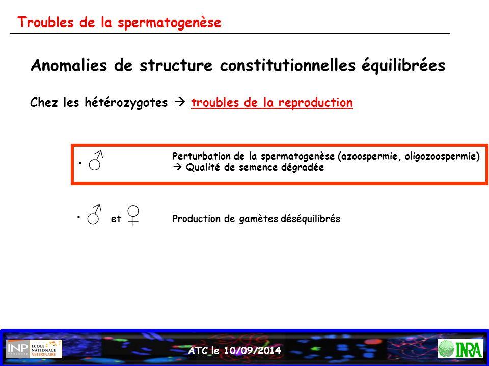 ATC le 10/09/2014 Troubles de la spermatogenèse Anomalies de structure constitutionnelles équilibrées Chez les hétérozygotes  troubles de la reproduc