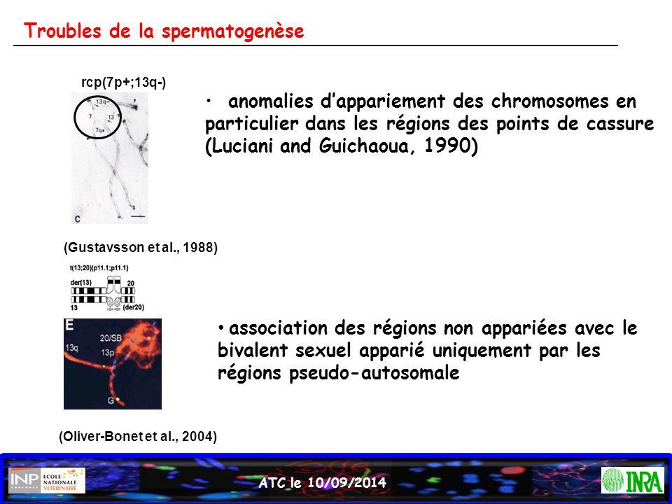 ATC le 10/09/2014 Troubles de la spermatogenèse rcp(7p+;13q-) (Gustavsson et al., 1988) (Oliver-Bonet et al., 2004) anomalies d'appariement des chromo