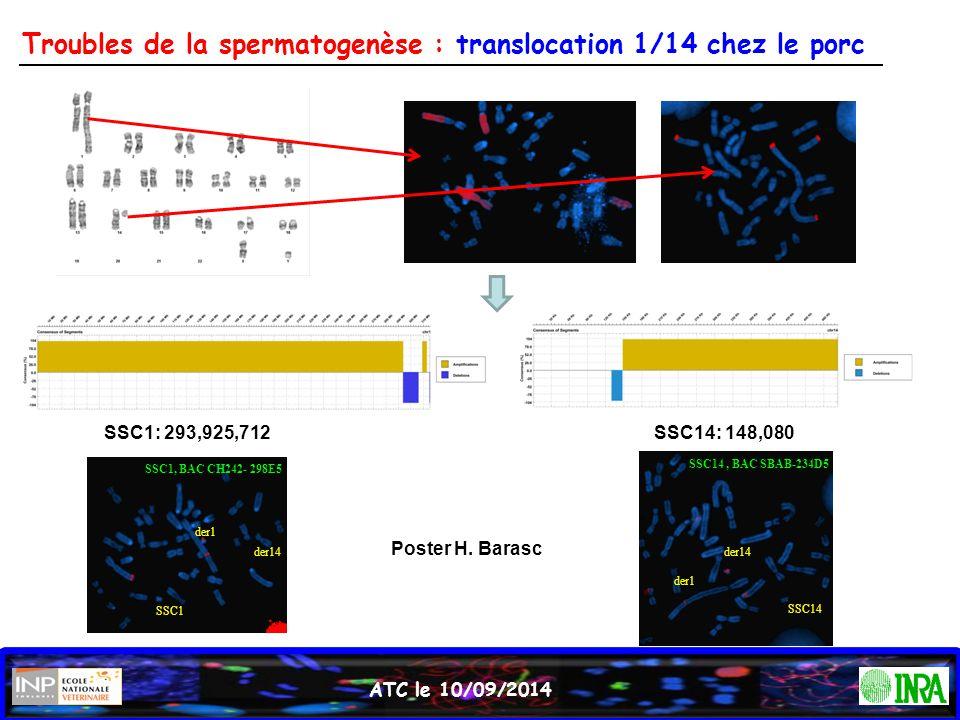 ATC le 10/09/2014 Troubles de la spermatogenèse : translocation 1/14 chez le porc SSC1: 293,925,712 der14 SSC1 der1 SSC1, BAC CH242- 298E5 SSC14: 148,