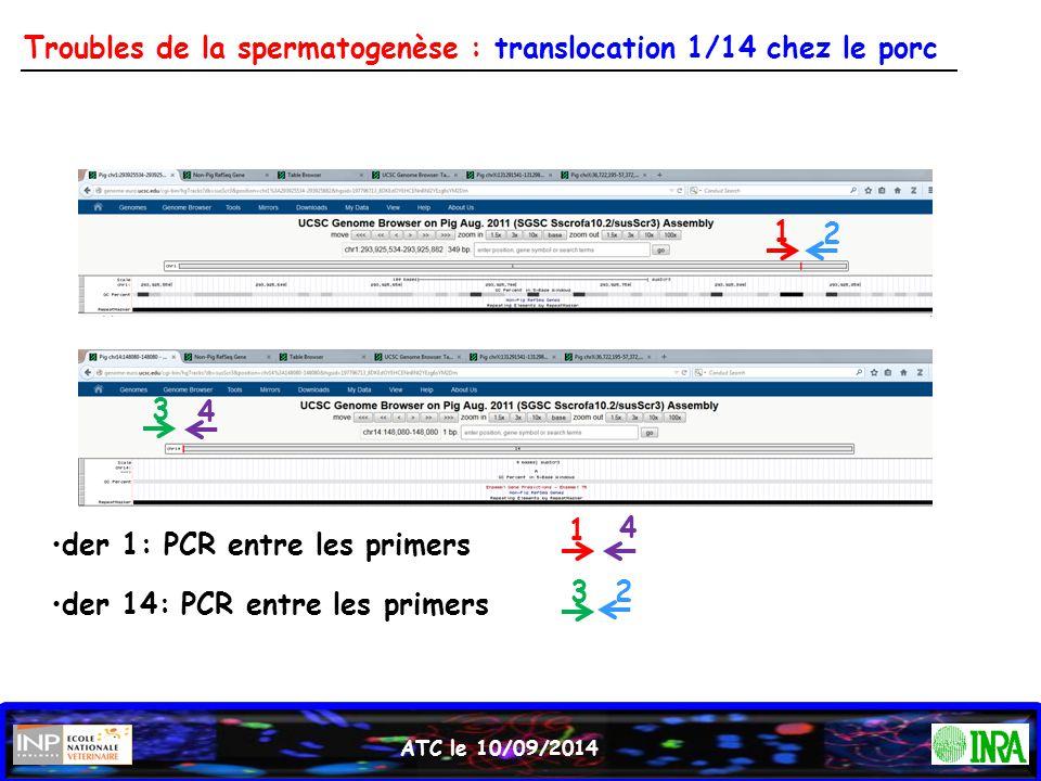 ATC le 10/09/2014 Troubles de la spermatogenèse : translocation 1/14 chez le porc 1 2 3 4 der 1: PCR entre les primers 1 4 der 14: PCR entre les prime