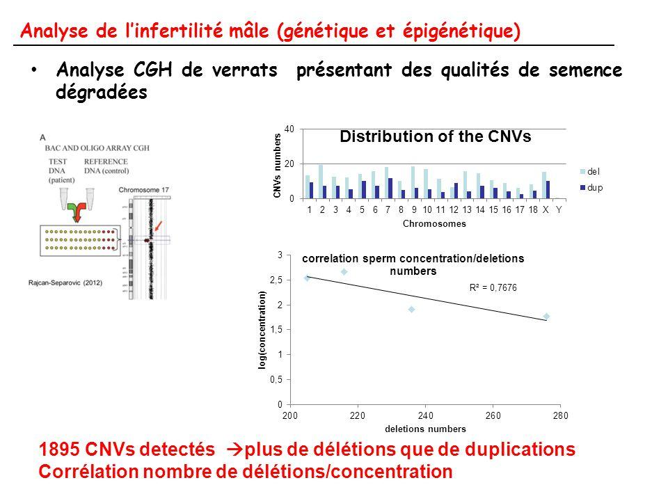 Analyse de l'infertilité mâle (génétique et épigénétique) Analyse CGH de verrats présentant des qualités de semence dégradées 1895 CNVs detectés  plu
