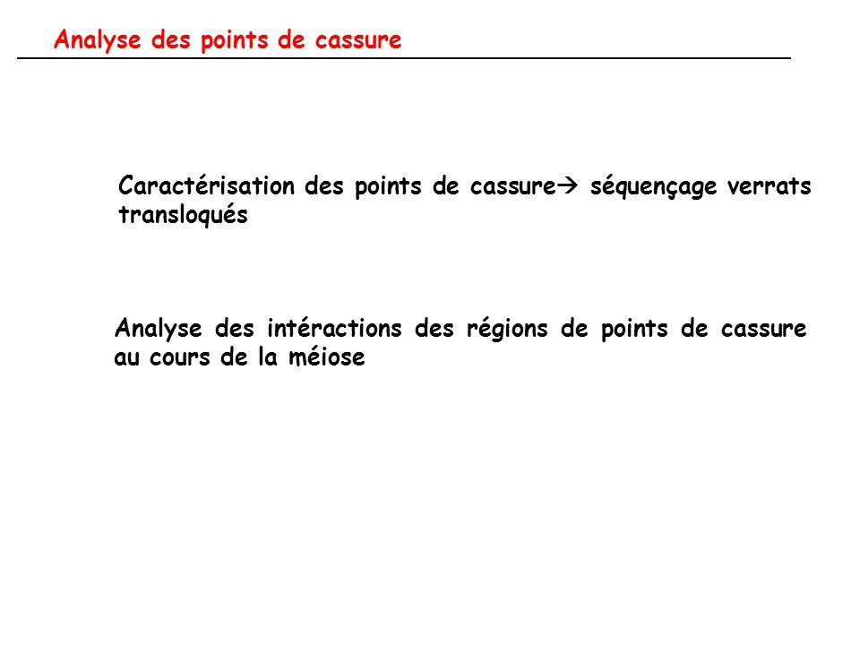 Caractérisation des points de cassure  séquençage verrats transloqués Analyse des intéractions des régions de points de cassure au cours de la méiose