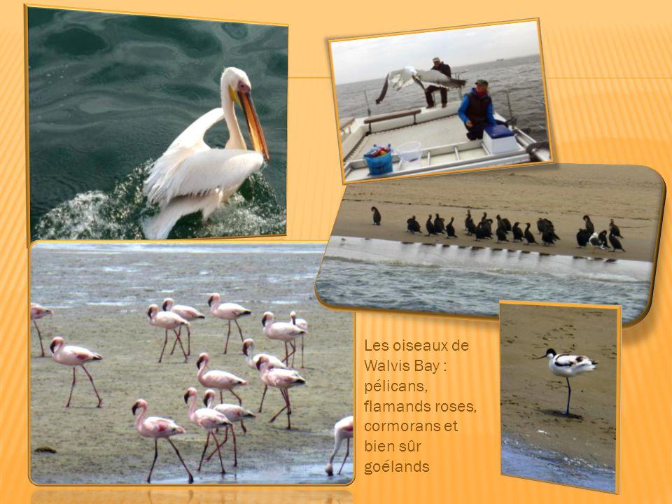 Choucas, merles, tisserins, outardes, autruches, tourterelles font partie des 340 espèces d'oiseaux que l'on peut rencontrer. Nid de tisserins sociabl