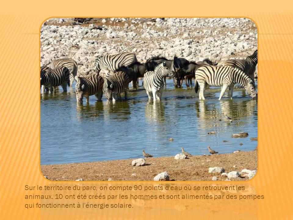 Impala, koudous, oryx, springbok,….