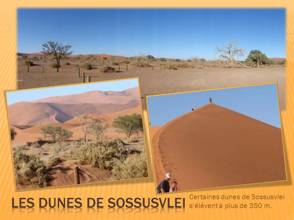 Certaines dunes de Sossusvlei s'élèvent à plus de 350 m.