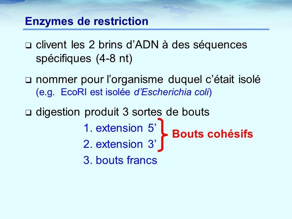 Enzymes de restriction  clivent les 2 brins d'ADN à des séquences spécifiques (4-8 nt)  nommer pour l'organisme duquel c'était isolé (e.g. EcoRI est