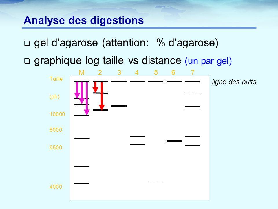  gel d'agarose (attention: % d'agarose)  graphique log taille vs distance (un par gel) Analyse des digestions M 2 3 4 5 6 7 Taille (pb) 10000 8000 6