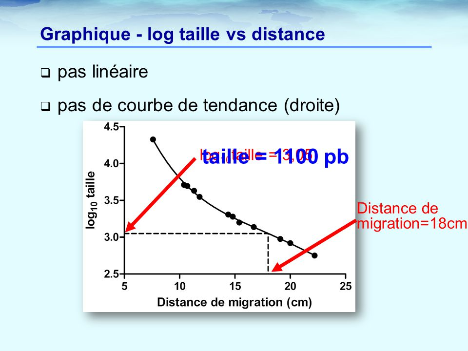 Graphique - log taille vs distance  pas linéaire  pas de courbe de tendance (droite) Distance de migration=18cm log 10 taille = 3,05 taille = 1100 p