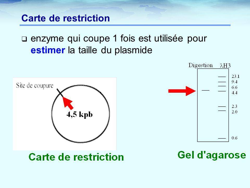  enzyme qui coupe 1 fois est utilisée pour estimer la taille du plasmide Carte de restriction