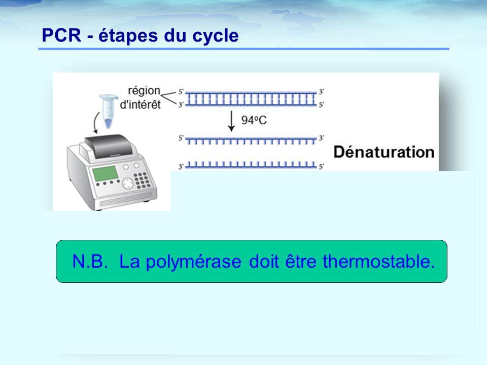 N.B. La polymérase doit être thermostable.