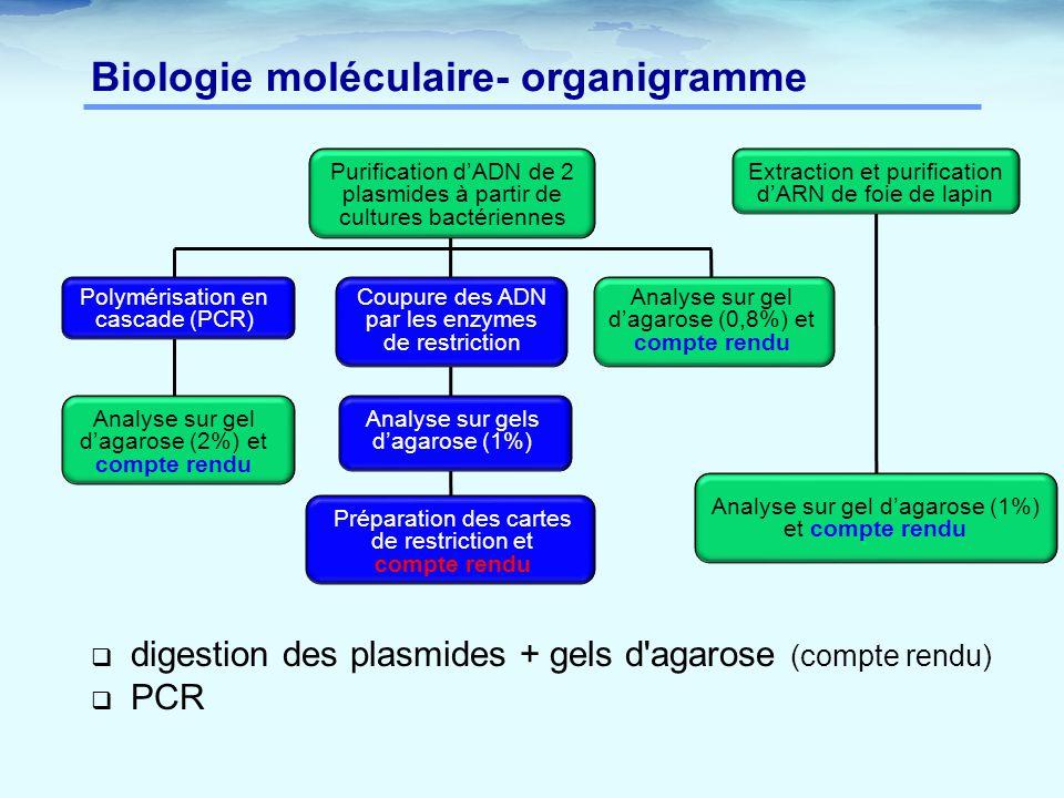 Biologie moléculaire- organigramme Purification d'ADN de 2 plasmides à partir de cultures bactériennes Coupure des ADN par les enzymes de restriction
