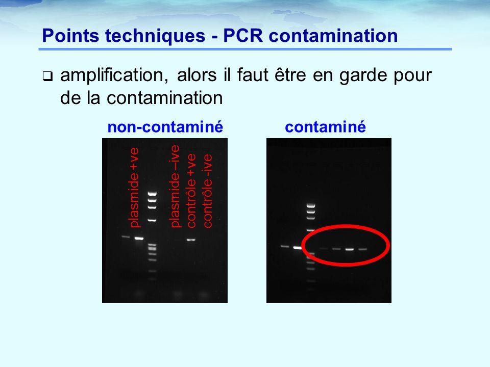 Points techniques - PCR contamination  amplification, alors il faut être en garde pour de la contamination non-contaminécontaminé plasmide +ve plasmi