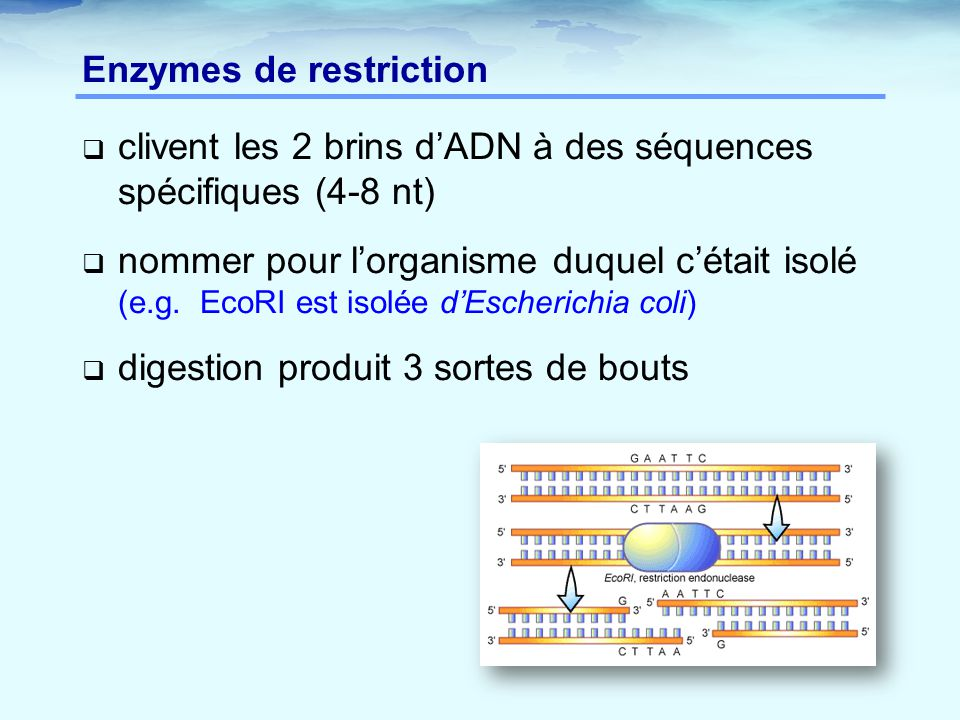 Exercice: carte de restriction Information: enzyme fragments# de sites BamHI 9+6 kpb 2 EcoRI 10+5 2 SalI 15 1 BamHI / EcoRI7, 3 X2, 2 kbp BamHI / SalI 9, 5, 1 EcoRI / SalI 10, 3, 2 3 ième étape: placer EcoRI EcoRI 5 10