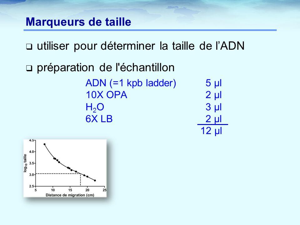 Marqueurs de taille  utiliser pour déterminer la taille de l'ADN  préparation de l'échantillon ADN (=1 kpb ladder)5 µl 10X OPA2 µl H 2 O3 µl 6X LB2