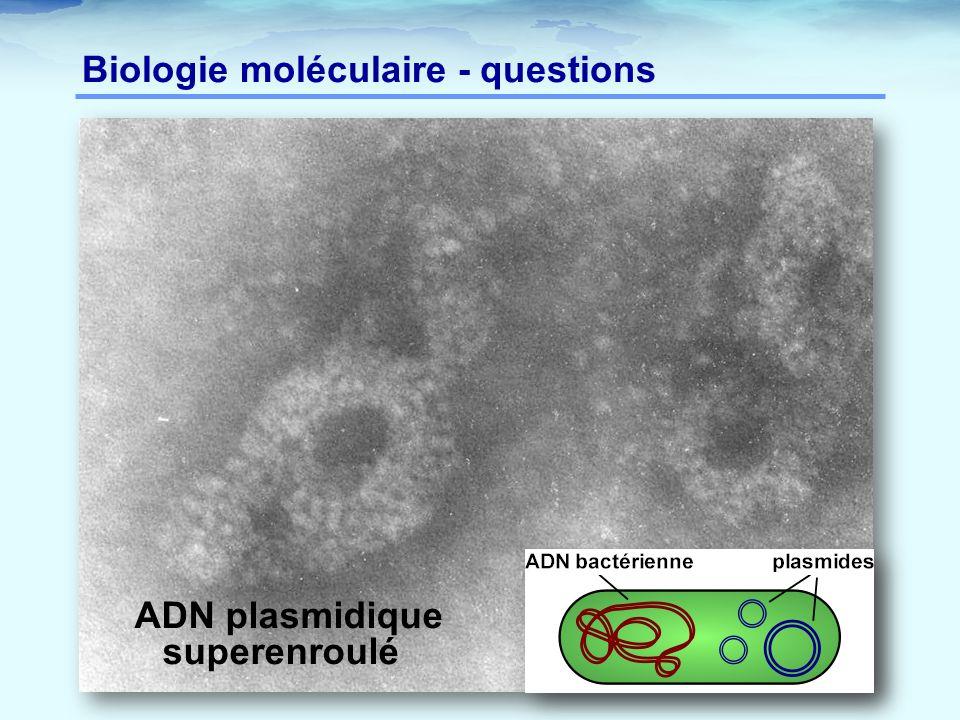Biologie moléculaire - questions ADN plasmidique superenroulé