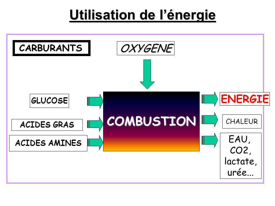 CARBURANTSS COMBUSTION OXYGENE GLUCOSE ACIDES GRAS ACIDES AMINES ENERGIE CHALEUR EAU, CO2, lactate, urée... Utilisation de l'énergie