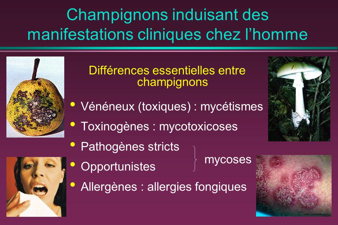 Champignons induisant des manifestations cliniques chez l'homme Différences essentielles entre champignons Vénéneux (toxiques) : mycétismes Toxinogènes : mycotoxicoses Pathogènes stricts Opportunistes Allergènes : allergies fongiques mycoses