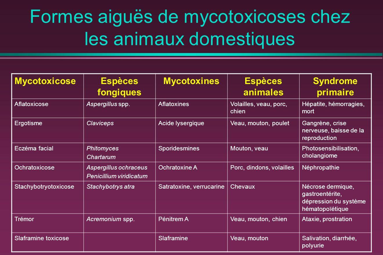 Formes aiguës de mycotoxicoses chez les animaux domestiques MycotoxicoseEspèces fongiques MycotoxinesEspèces animales Syndrome primaire AflatoxicoseAspergillus spp.AflatoxinesVolailles, veau, porc, chien Hépatite, hémorragies, mort ErgotismeClavicepsAcide lysergiqueVeau, mouton, pouletGangrène, crise nerveuse, baisse de la reproduction Eczéma facialPhitomyces Chartarum SporidesminesMouton, veauPhotosensibilisation, cholangiome OchratoxicoseAspergillus ochraceus Penicillium viridicatum Ochratoxine APorc, dindons, volaillesNéphropathie StachybotryotoxicoseStachybotrys atraSatratoxine, verrucarineChevauxNécrose dermique, gastroentérite, dépression du système hématopoïétique TrémorAcremonium spp.Pénitrem AVeau, mouton, chienAtaxie, prostration Slaframine toxicoseSlaframineVeau, moutonSalivation, diarrhée, polyurie