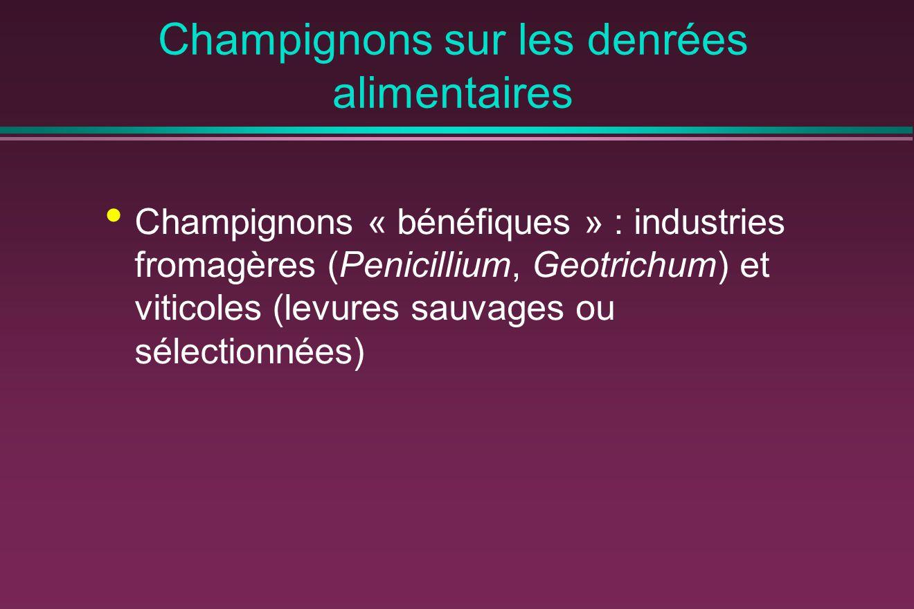 Champignons sur les denrées alimentaires Champignons « bénéfiques » : industries fromagères (Penicillium, Geotrichum) et viticoles (levures sauvages ou sélectionnées)