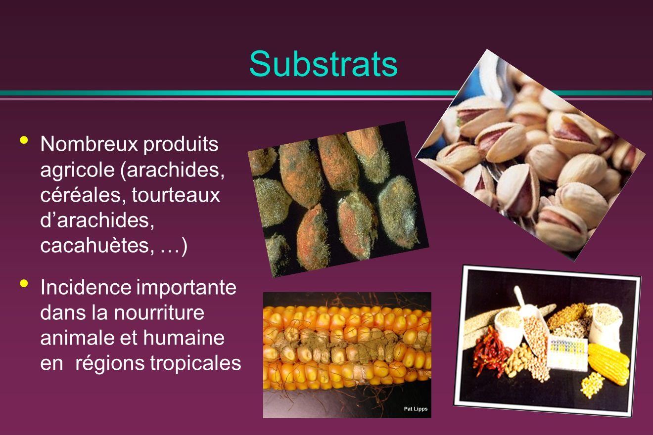 Substrats Nombreux produits agricole (arachides, céréales, tourteaux d'arachides, cacahuètes, …) Incidence importante dans la nourriture animale et humaine en régions tropicales