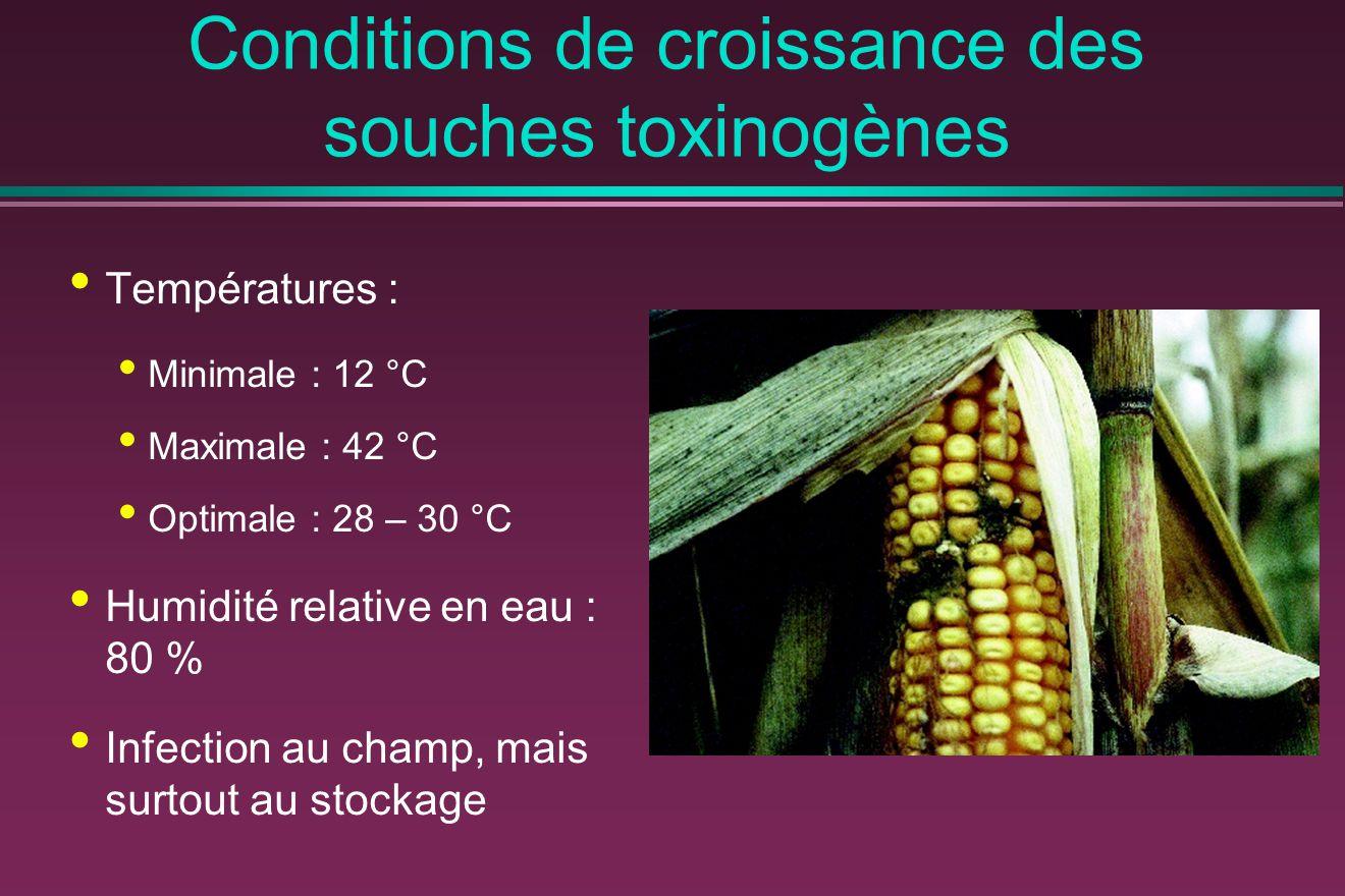 Conditions de croissance des souches toxinogènes Températures : Minimale : 12 °C Maximale : 42 °C Optimale : 28 – 30 °C Humidité relative en eau : 80 % Infection au champ, mais surtout au stockage