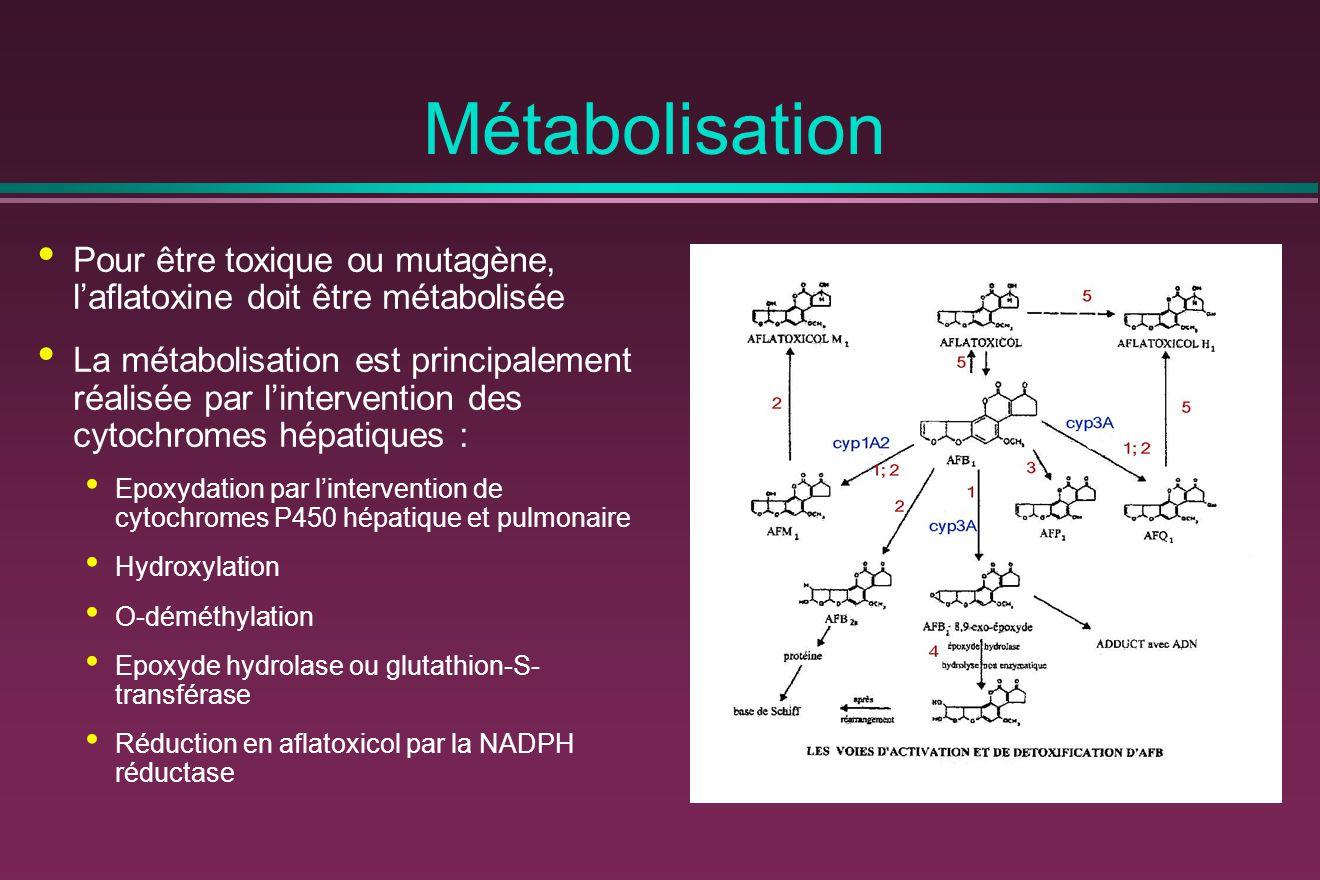 Pour être toxique ou mutagène, l'aflatoxine doit être métabolisée La métabolisation est principalement réalisée par l'intervention des cytochromes hépatiques : Epoxydation par l'intervention de cytochromes P450 hépatique et pulmonaire Hydroxylation O-déméthylation Epoxyde hydrolase ou glutathion-S- transférase Réduction en aflatoxicol par la NADPH réductase Métabolisation