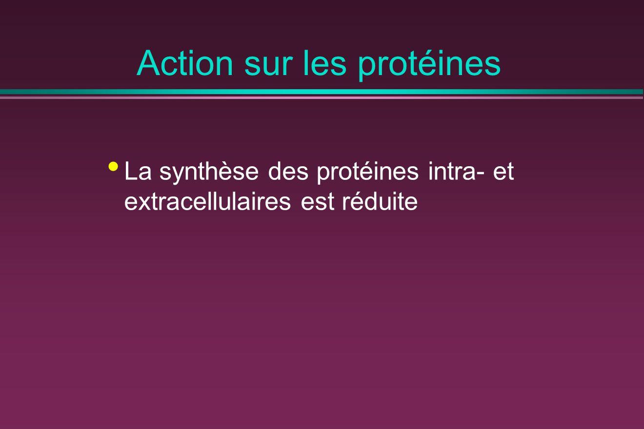 Action sur les protéines La synthèse des protéines intra- et extracellulaires est réduite