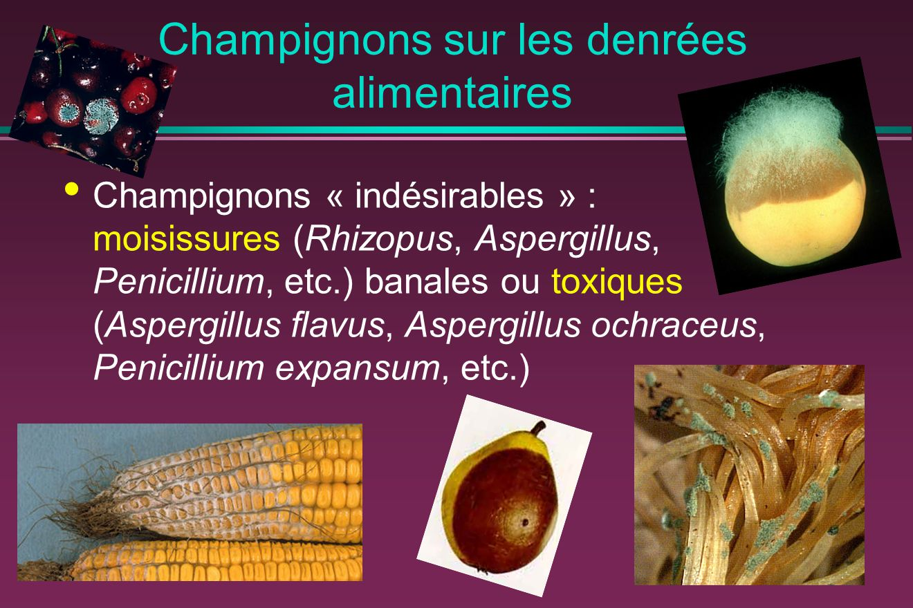 Champignons sur les denrées alimentaires Champignons « indésirables » : moisissures (Rhizopus, Aspergillus, Penicillium, etc.) banales ou toxiques (Aspergillus flavus, Aspergillus ochraceus, Penicillium expansum, etc.)
